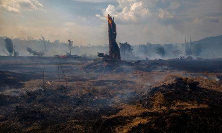 Ekolojik Çöküş – 1